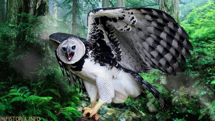 Птица Гарпия - фото на mifistoria.info