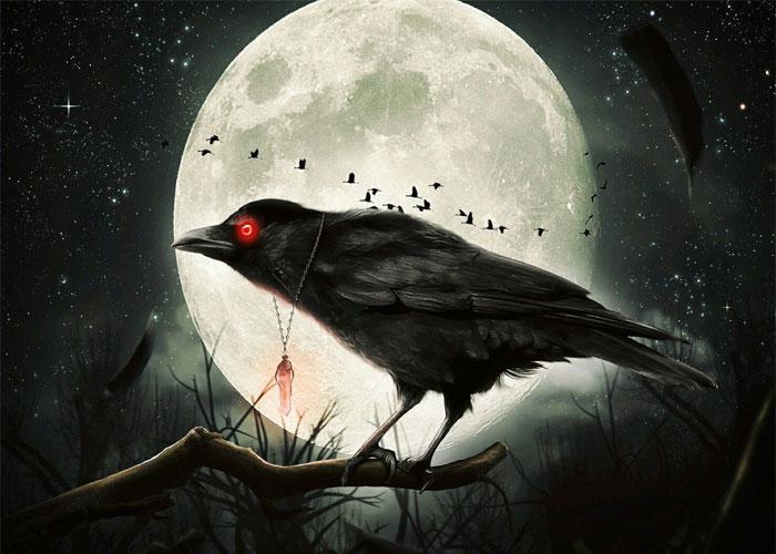 красноглазый ворон