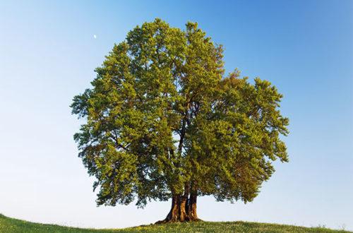 """Авторский рассказ """"Деревья"""" - на mifistoria.info"""