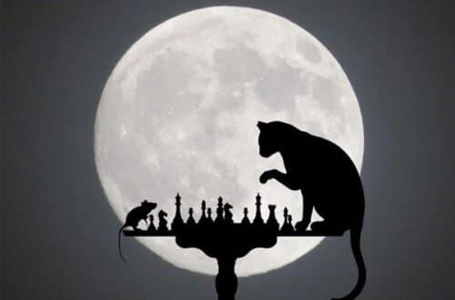 """Мини-рассказ - """"Кармический кот"""""""