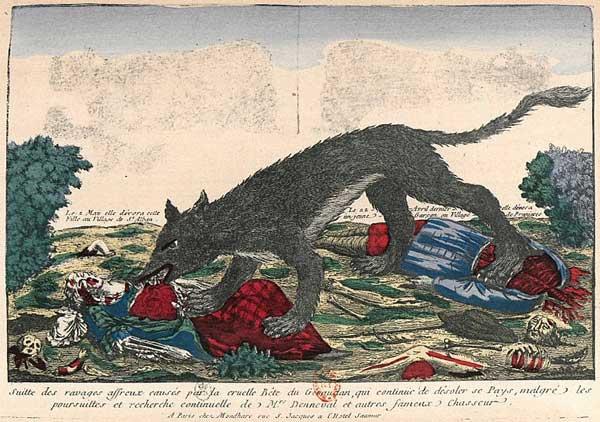 Жеводанский зверь доедает добычу