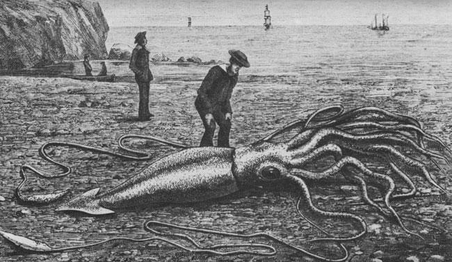 Найденный на берегу гигантский кальмар