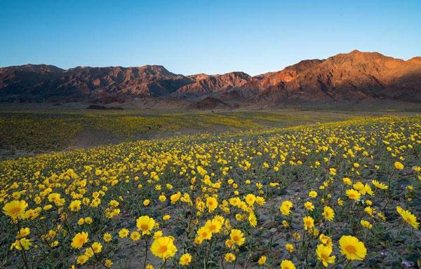 Долина Смерти в Америке весной