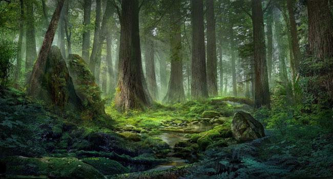 Лес - начало пути героя