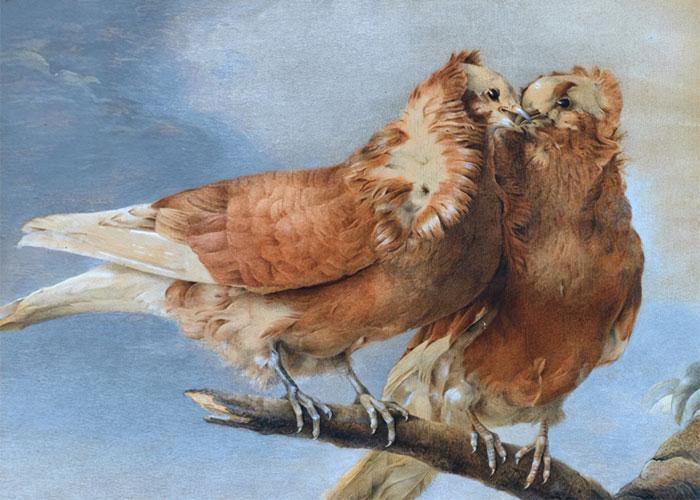 «Две горлицы», 1762 год