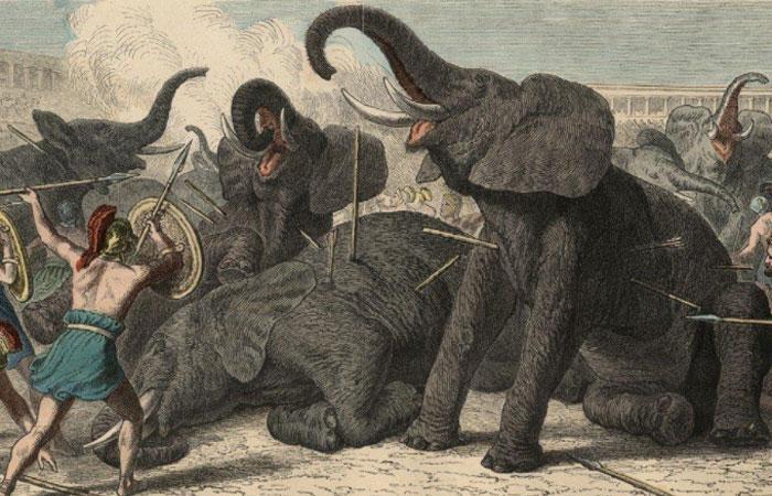 Схватки между зверями и воинами